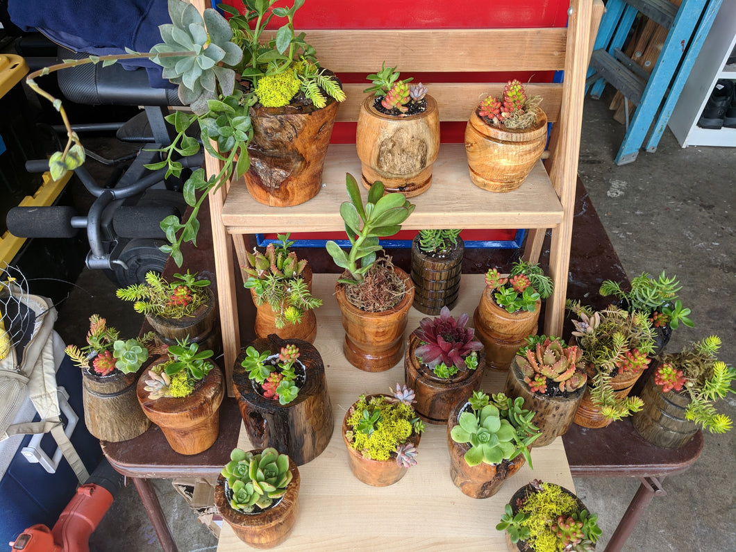 Succulents Planted in Hand Turned Wood Planter