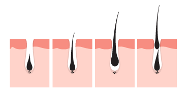 Four Phases of Hair Lifecycle