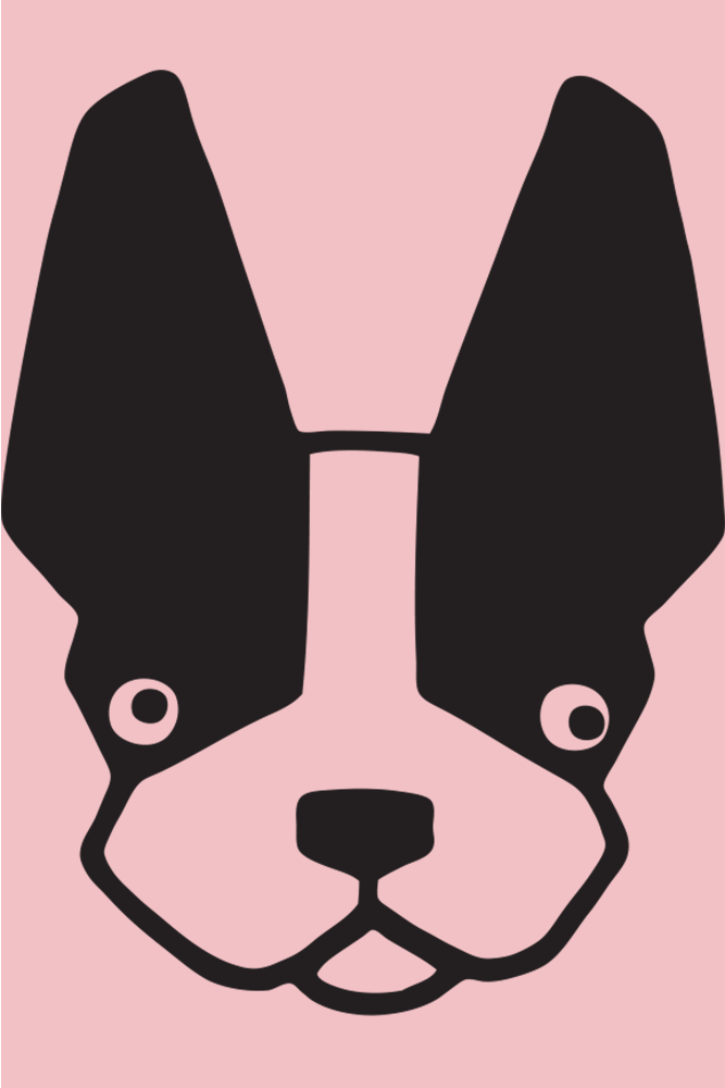 Closeup of black bulldog face with pink background