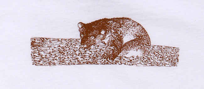 DETAIL OF BROWN BEAR SLEEPING ON LOG