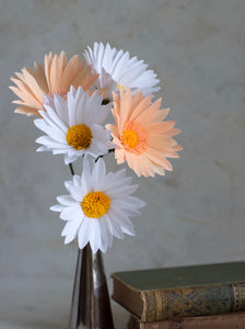 Paper white and peach daisies
