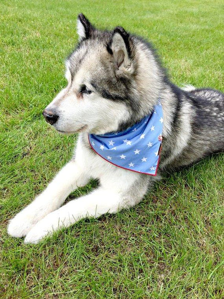 Fourth of July dog bandana - CHIEF // Red white and blue dog bandana // Patriotic dog bandana // American bandana // Stars and stripes