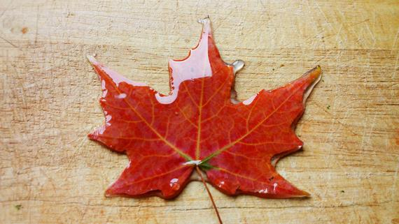 Resin Preserved Autumn Leaf w/ Personalised Message. Wedding, Birthday Gifts, Christmas Decorations. Maple leaf / Real Fall Leaves for Sale