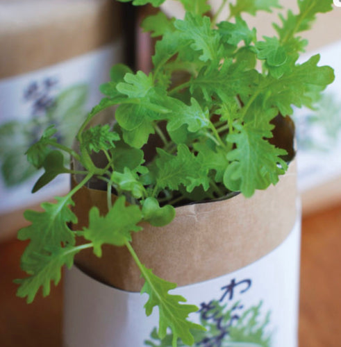 Cultivate and Eat - Japanese Herbs