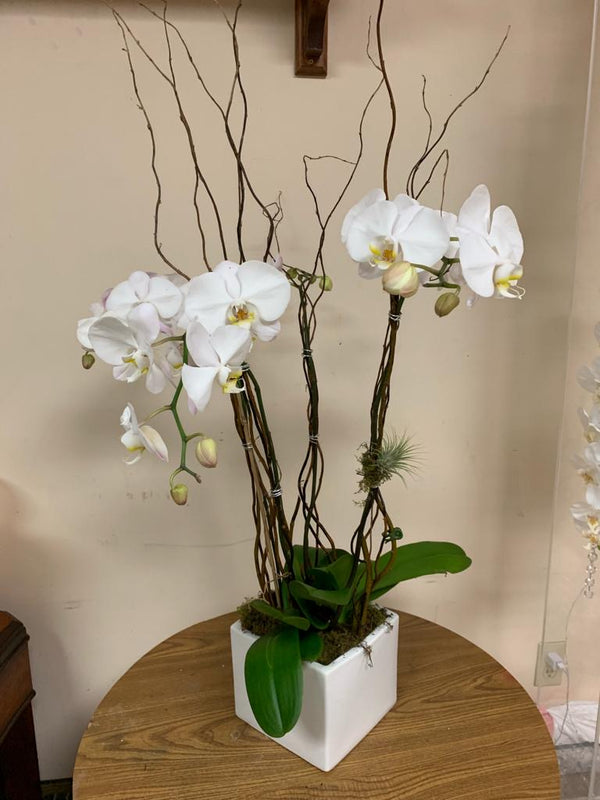 GLW088 - WHITE ORCHIDS (Cube Vase)