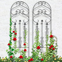 Buy Garden Trellis for Climbing Plants
