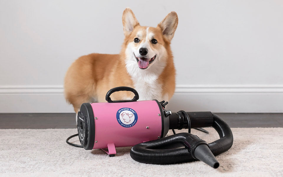 flying pig high velocity pet dog dryer - corgi grooming