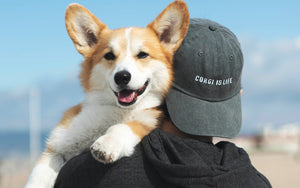 corgi apparel hat sweatshirt