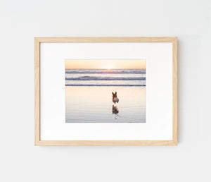 Photo print of corgi hop on sunset beach by LaCorgi.