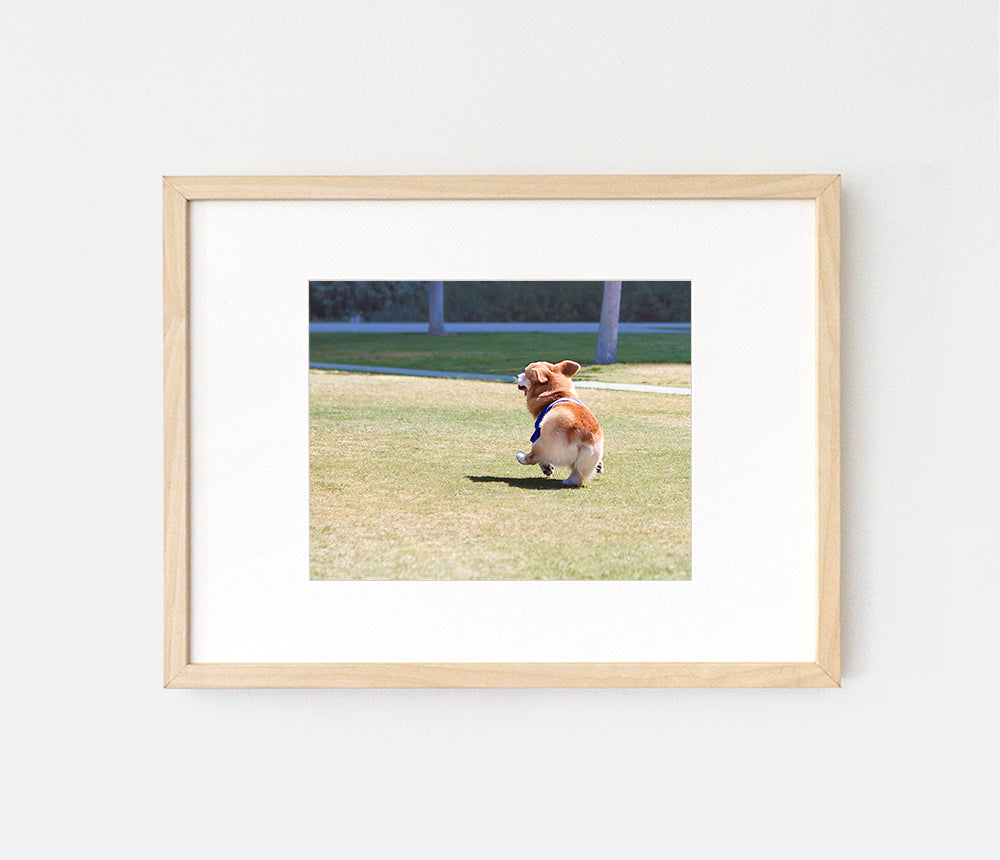Photo print of a dancing razzle dazzle corgi by LaCorgi