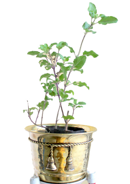 Decorative Brass Planter