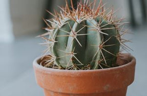 Why Isn't My Cactus Growing? Explained