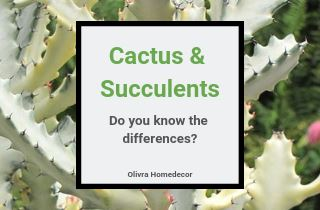 Cactus Vs Succulents What Is The Difference?