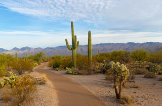 What is the cactus habitat? Explained
