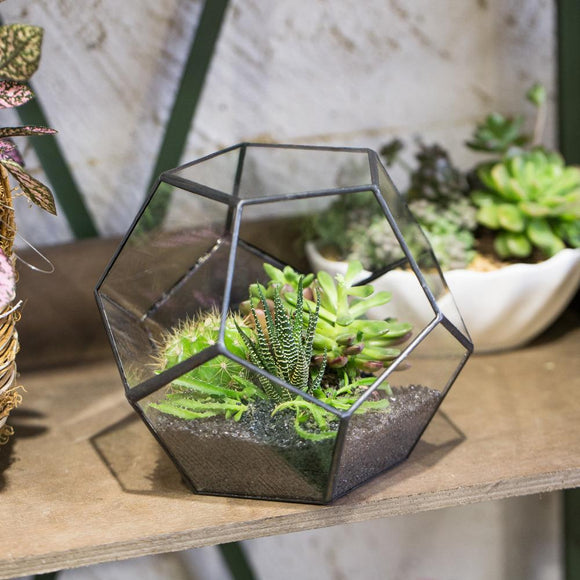 Olivra Homedecor Collections Plant Terrariums