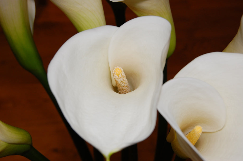 Peace Lily Houseplants To Improve Indoor Air Quality