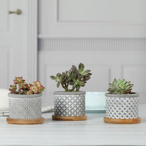 Small Cement Succulent Planters