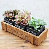 Cube Cement Houseplant Succulent Planters with Box