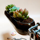 Magic Floating Glass Wine Bottle Succulent Planter