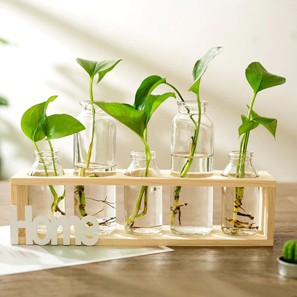 Home Wooden Propagation Station