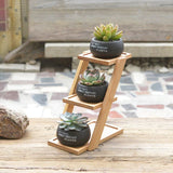 Concrete Succulent Planters with Stand