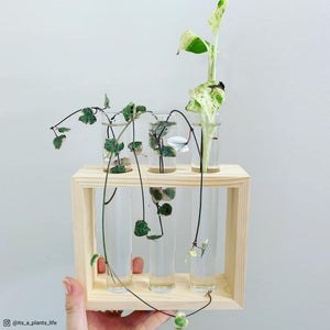 Test Tube Water Propagation Stand