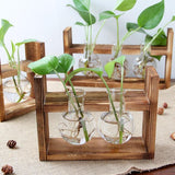 Wooden Water Propagation Station