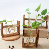 Wooden Houseplant Rooting Stand