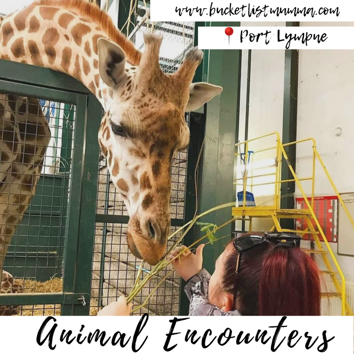 ✅Bucket List: Animal Encounters at Port Lympne Hotel & Reserve