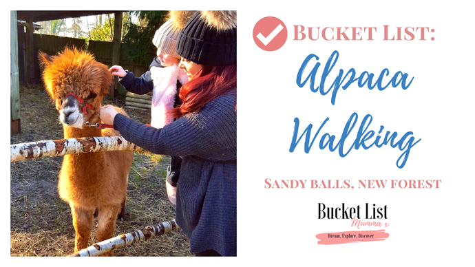 ✅Bucket List: Walking Alpacas