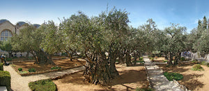 Day three: Mountain of Olives and Garden of Gethsemane