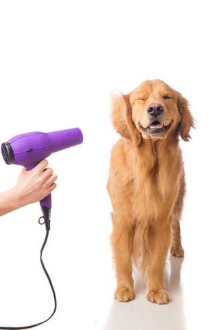 Blow drying your dog