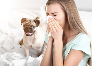 Pets and Allergies: The Myth Behind It