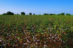 Organic Cotton Farming is Indeed Eco-friendly