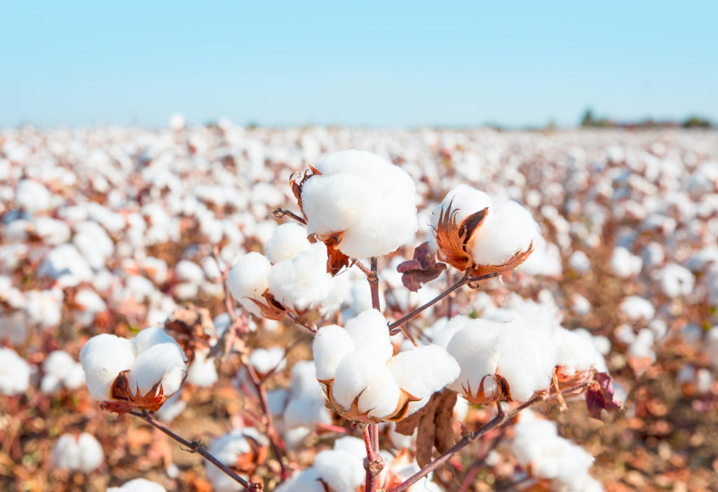 5 Beneficial Attributes People Love About Cotton