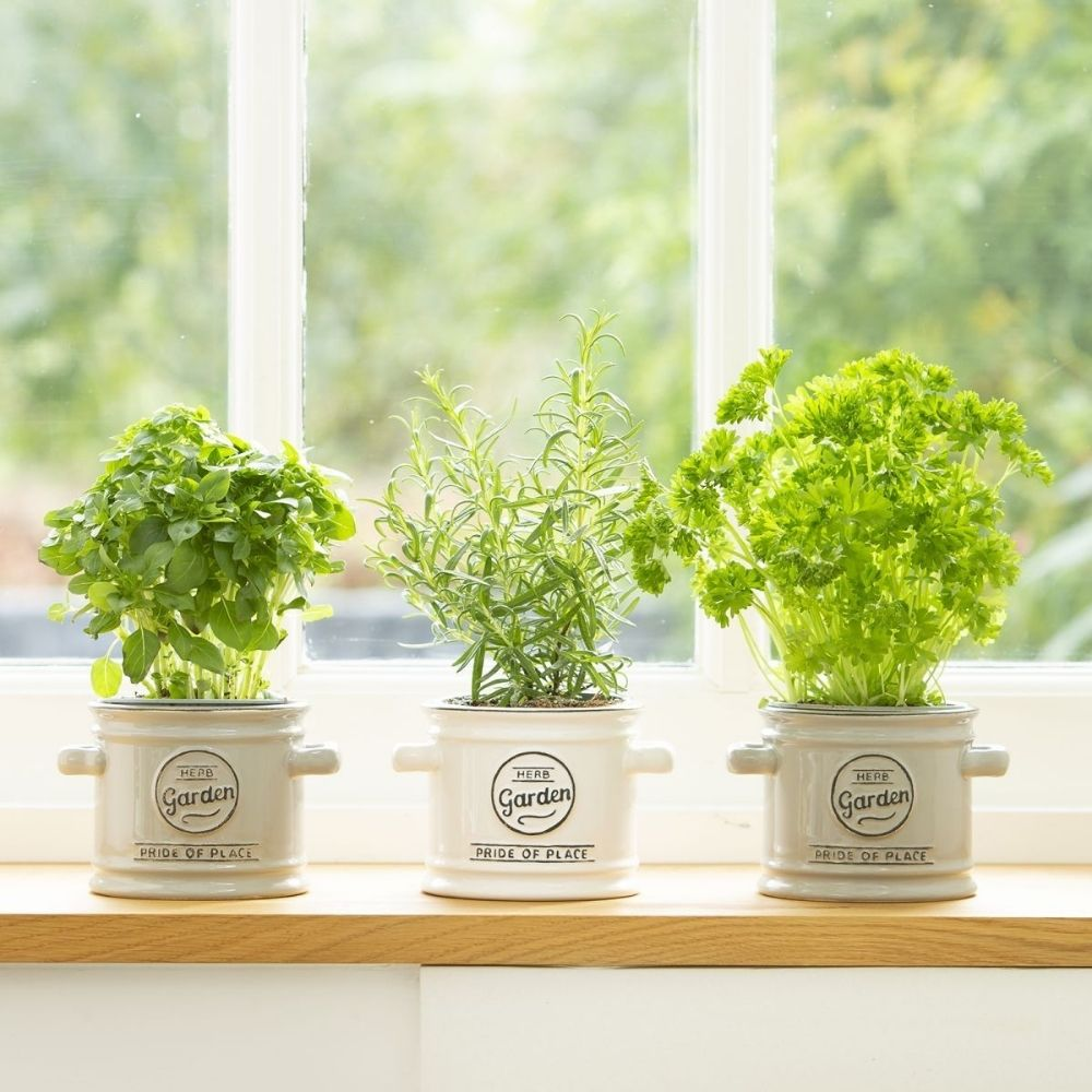 Pride of place herb garden plant pot in white from funky gifts nz