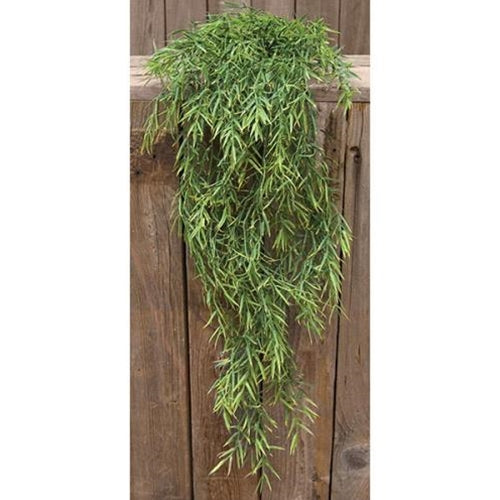 Dill Leaves Hanging Bush, 34