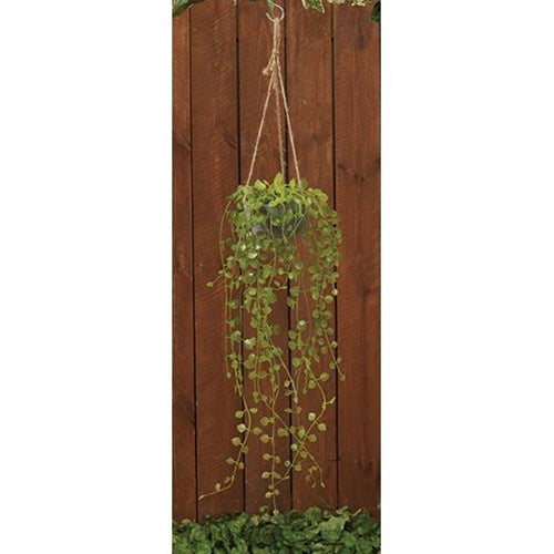 "Hanging Potted Succulent, 29""Old Time Shoppe"
