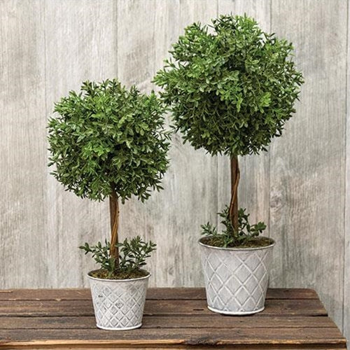 New England Boxwood Topiary