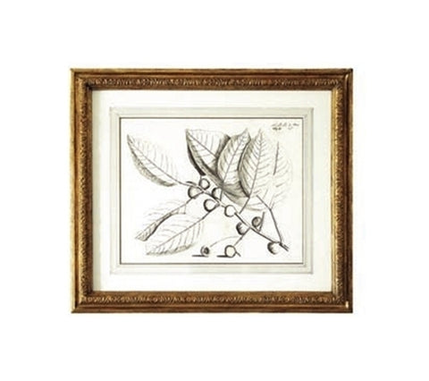 BOTANICAL PRINTS WITH GILT FRAMES