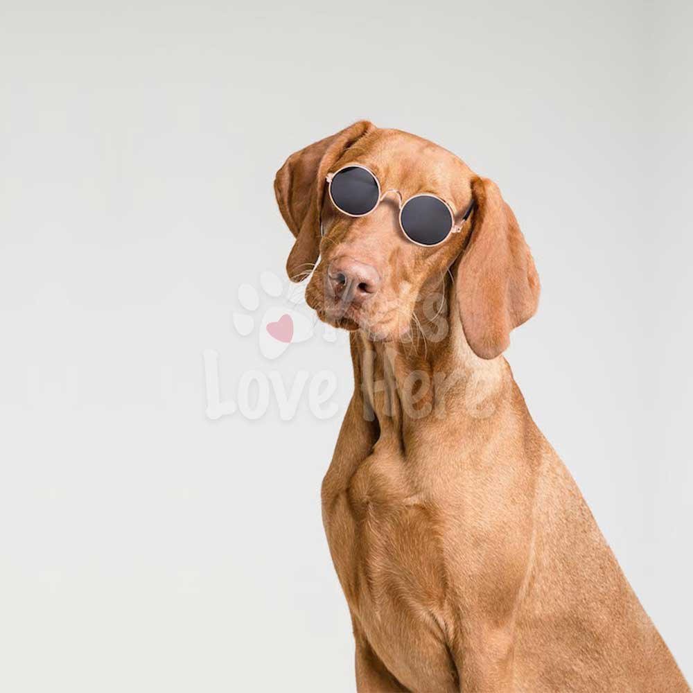 Stylish Pet Sunglasses