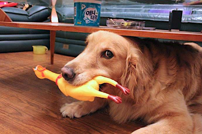 Viral Screaming Chicken Gag Toy For Dogs