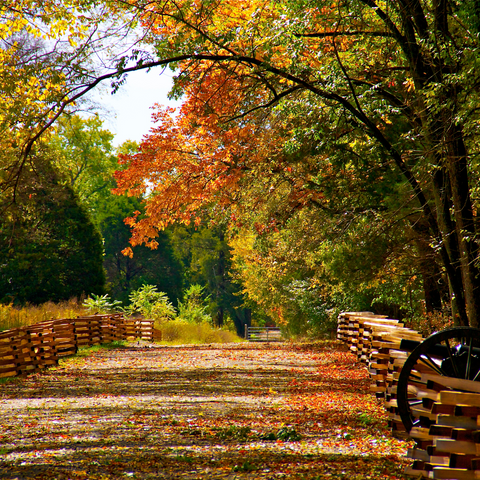 An empty beautiful fall trail on a sunny day