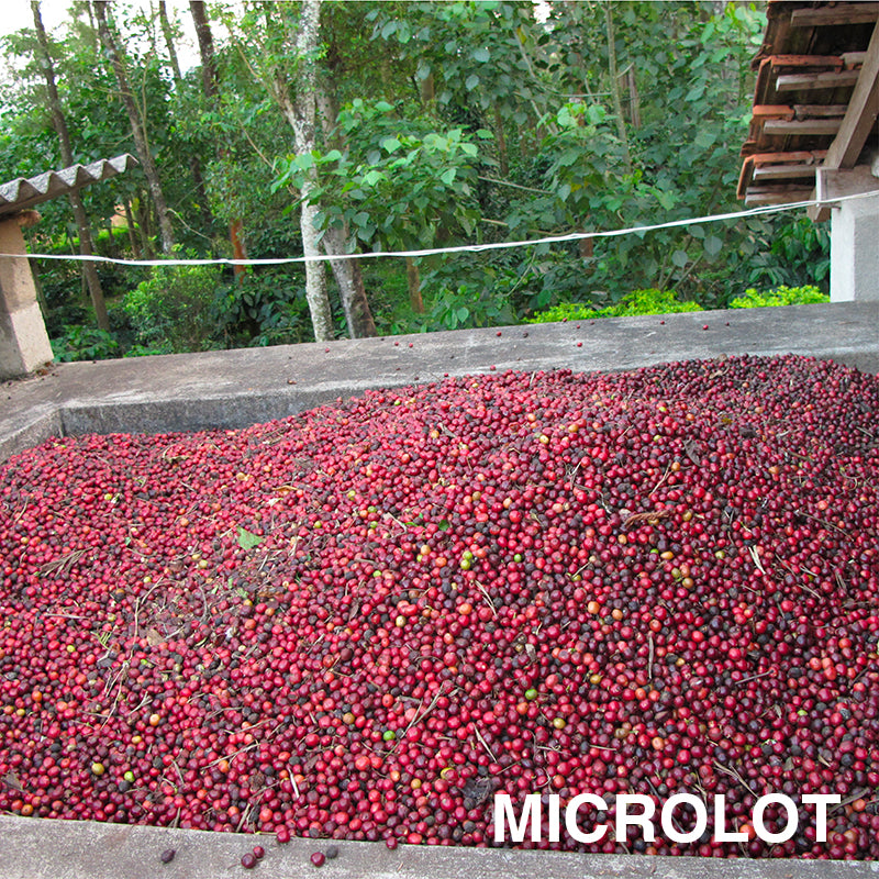 Indian Kelagur Heights - Rubra Coffee