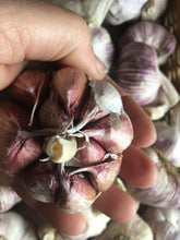 Italian Purple Stripe Garlic