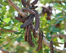 Load image into Gallery viewer, Carob Tea - Ceratoniasiliqua L.