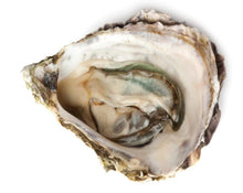 Load image into Gallery viewer, Oyster Calcium - Calcaria Carbonica