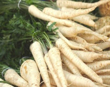 Load image into Gallery viewer, Parsley Root - Petroselinum Sativum