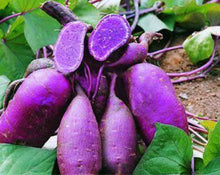 Load image into Gallery viewer, Purple Sweet Potato Powder - Ipomoea Batatas L.