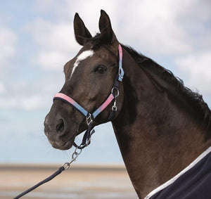 Nylon head collar -Venezia-